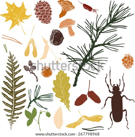 big set of  forest objects silhouettes, seeds, leaves, twigs, pine cones, hand drawn vector illustration - stock vector