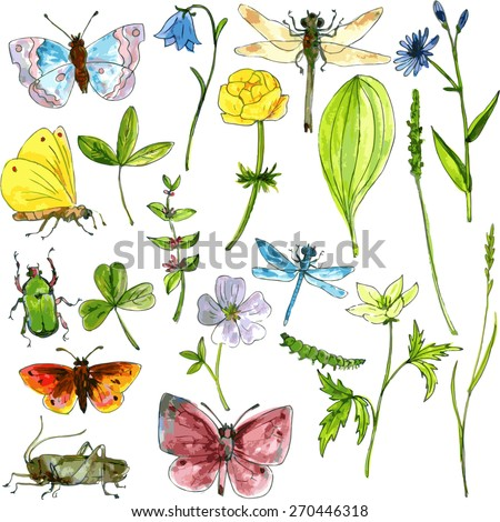 big set of ink drawing meadow objects, plants, flowers, grass, insects, drawing by watercolor hand drawn vector illustration - stock vector