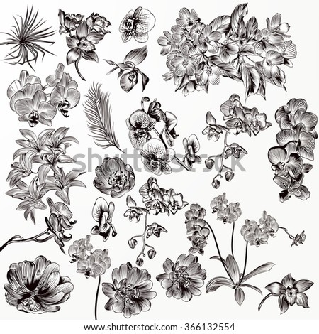 Big set or collection of vector hand drawn orchid flowers in engraved style - stock vector