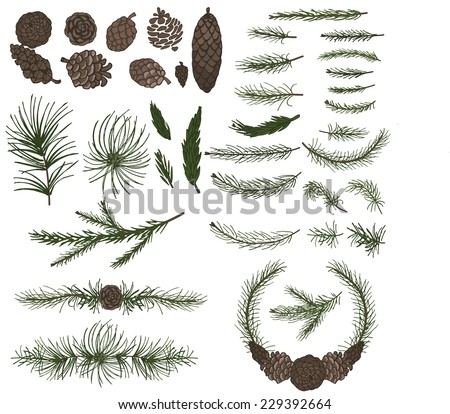 Big  set with pine,spruce branches ,cones,group,border.Modern flat decor elements for invitations,print,feb,card,banner. Christmas festive vector,nature illustration. - stock vector