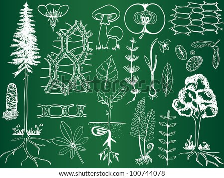 Biology plant sketches on school board - botany hand-drawn illustration - stock vector