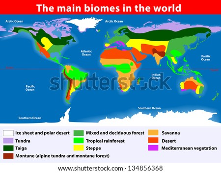 Biotope. Earth's Terrestrial Biomes. Vector map - stock vector