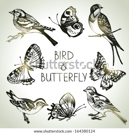 Bird and butterfly set, hand drawn illustrations  - stock vector