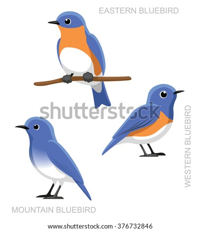 Bluebird Illustration
