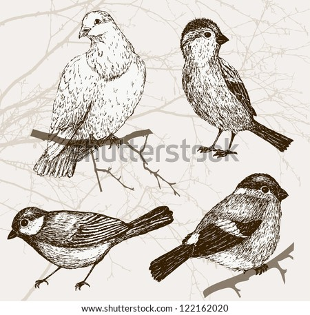 Bird collection - sparrow, pigeon, bullfinch, titmouse. Set of vintage bird on background with branch - stock vector