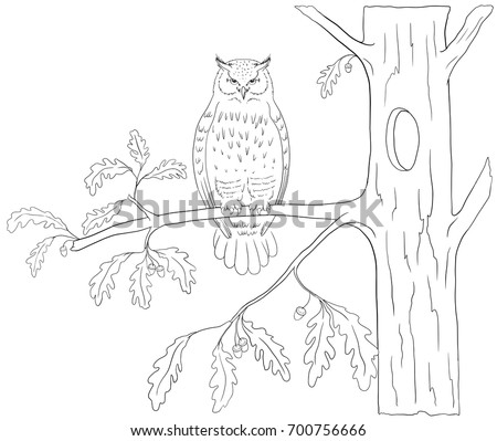 Bird Coloring Book Isolated On White Stock Vector 700756666 ...
