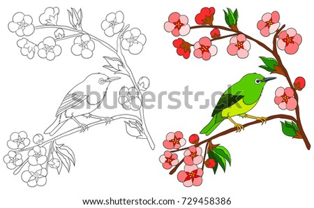 Bird Coloring Book Isolated On White Stock Vector HD (Royalty Free ...