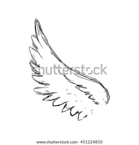 Bird concept represented by sketch wing icon. Isolated and flat illustration