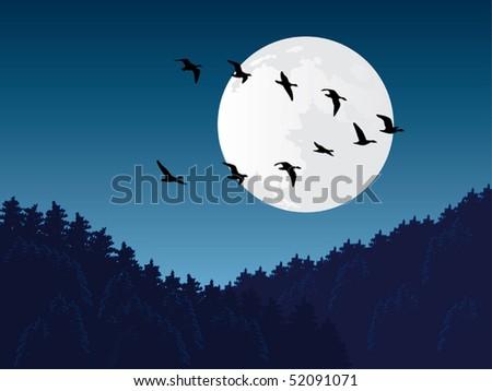 Bird migration vector - stock vector