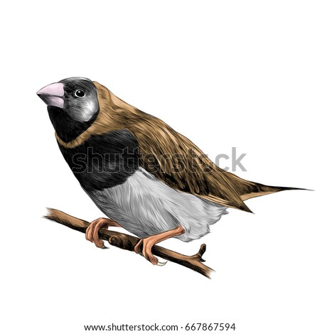 bird of finches sitting on a branch of a tree sketch vector graphics color drawing of a beige and white feathers