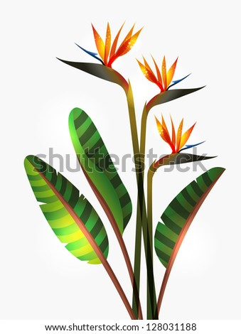 Bird of Paradise flower isolated over white background. EPS10 file version. This illustration contains transparencies and is layered for easy manipulation and custom coloring - stock vector