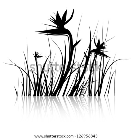Bird of Paradise Flower (Strelitzia) Silhouette in Black and White