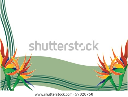 bird of paradise  with green background