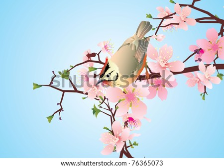 bird on the blossoming cherry detailed vector