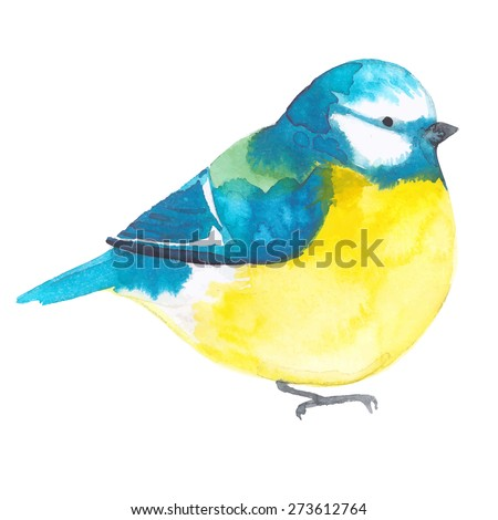 Bird painted on watercolor paper. Etude birds on a white background. Titmouse