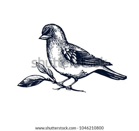 Bird Robin Hand Drawn Isolated Vector Stock Vector - Engraving templates