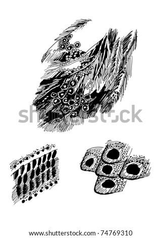 bird's feathers graphic vector sketch - stock vector