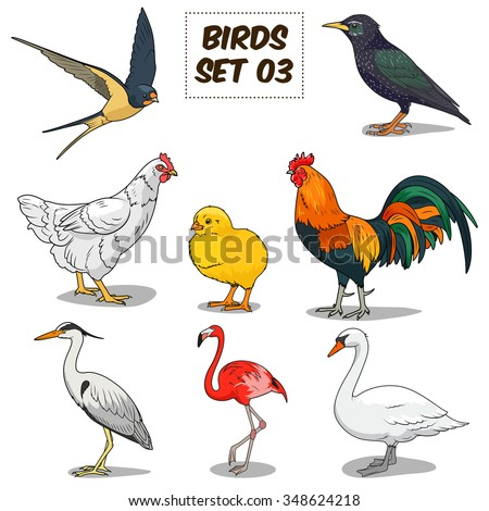 Bird set cartoon colorful vector illustration. Educational material - stock vector