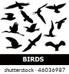 bird silhouette - stock