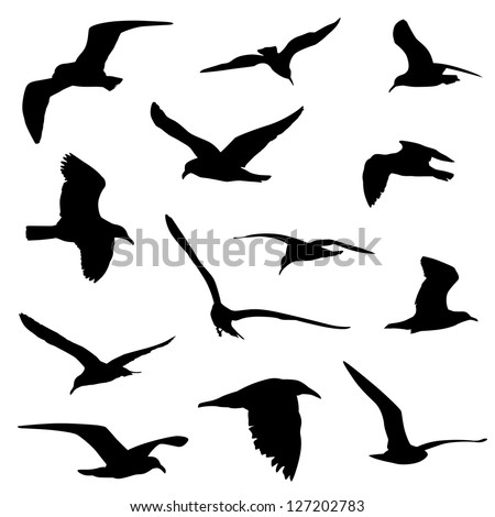 seagull silhouette stock images  royalty free images tree bird silhouette vector bird nest silhouette vector