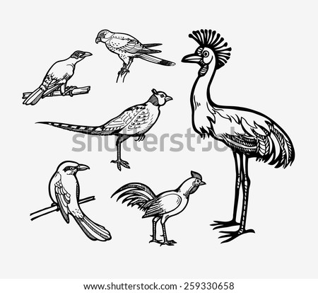 Bird sketch vector set 3. Good use for sticker design, symbol, icon, illustration, or any design you want. Easy to use, edit, or change color. Each object is a group. - stock vector
