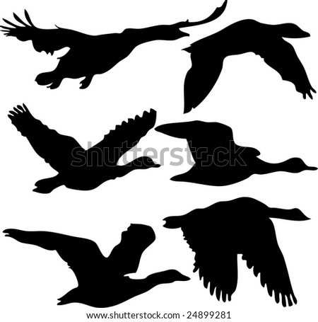 bird, vector, silhouette - stock vector