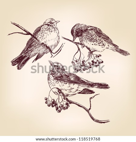 bird  - vintage hand drawn vector illustration - stock vector