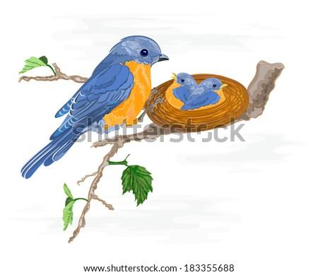 Birdie and little birds in the nest vector illustration - stock vector