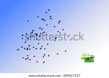 Birds on a background of blue sky. Vector