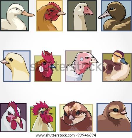 birds on a farm - stock vector