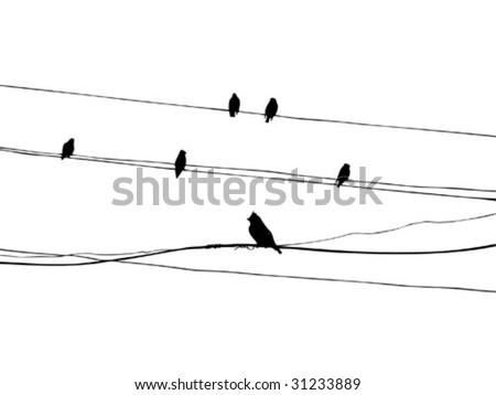 birds on wire, vector - stock vector