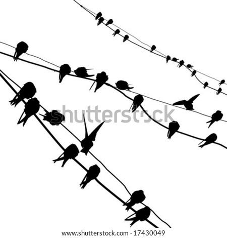 Birds on Wires - stock vector