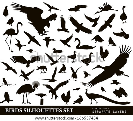Birds vector silhouettes set. EPS 10 - stock vector