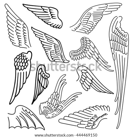 Birds & wings set linear silhouette isolated on background, vector illustration - stock vector