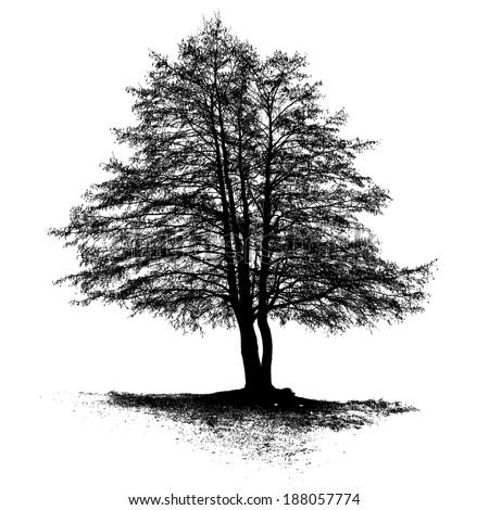 Black Alder full size tree isolated silhouette, vector - stock vector