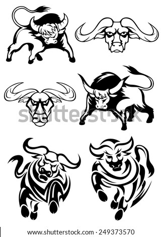 Black and white bulls or buffaloes in various poses as two heads, two charging and two with heads lowered threateningly - stock vector
