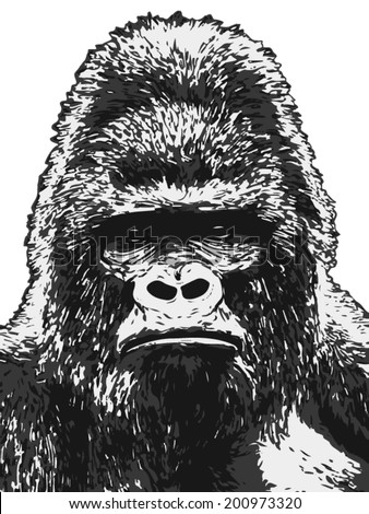 Black and white closeup sketch portrait of a gorilla male, severe silver back, isolated on white background. The most dangerous and biggest monkey of the world. Vector illustration. - stock vector
