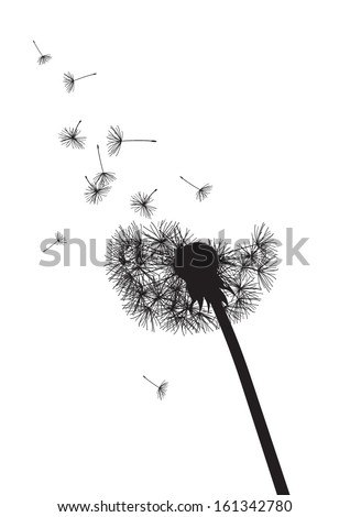 black and white dandelion with flying seeds - stock vector