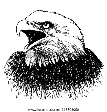 Black and white eagle hand drawn on white background - stock vector