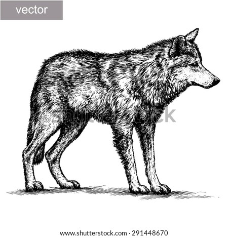 black and white engrave isolated vector wolf - stock vector