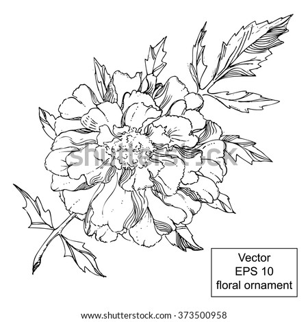 black and white floral ornament with flowers and leaves hand drawn marigold ornament vector