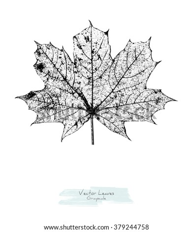 Black and white (grayscale) vector maple leave; stylized as stamp or imprint; rustic or boho style - stock vector