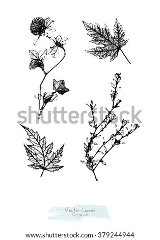 Black and white (grayscale) vector set of maple leaves and herbs (Clover and knotgrass or Polygonum aviculare); stylized as stamp or imprint - stock vector
