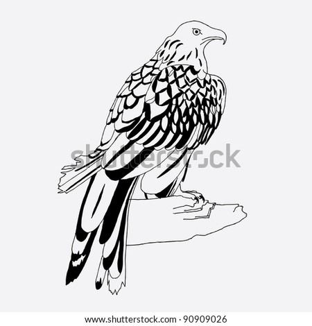 Black and white hawk on white background.