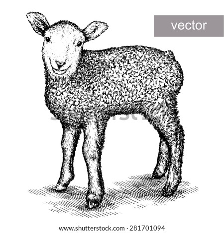 black and white illustration of engraving vector lamb on white background - stock vector