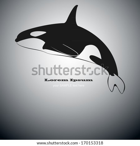Black and white killer whale vector - stock vector
