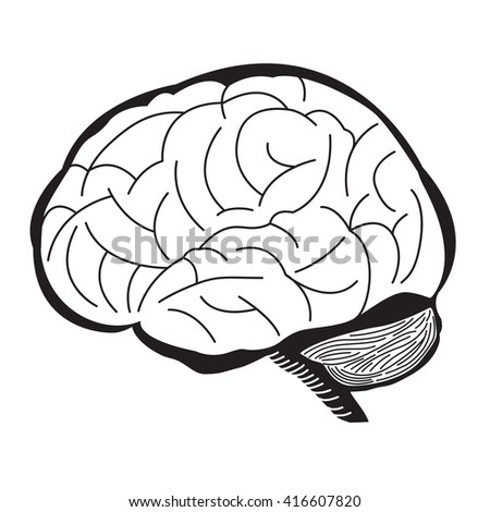 Black and White of Human Brain Outline Draw Illustration