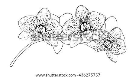 Orchid Vector Stock Images, Royalty-Free Images & Vectors ...