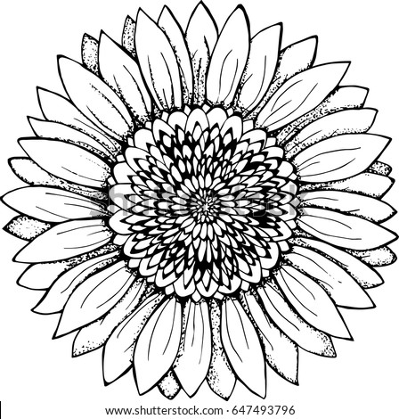 Black white picture sunflower flower illustration stock vector 2018 black and white picture of a sunflower flower illustration mightylinksfo Gallery