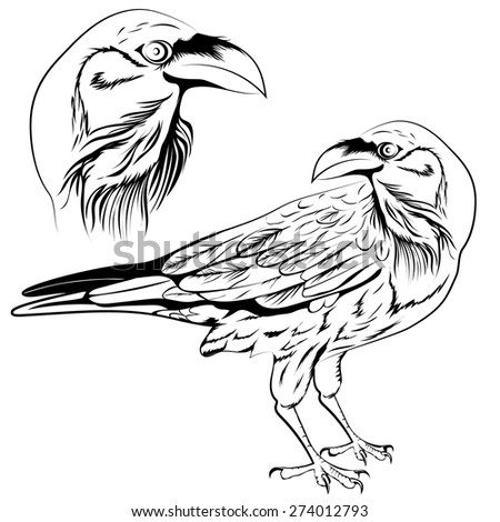Black and white raven, a set of two objects: a head and a bird. Vector illustration